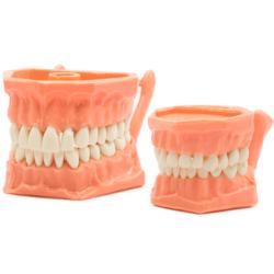 Tipodonto Acrílico -Marca: Genérica Oficina   Odontology BG