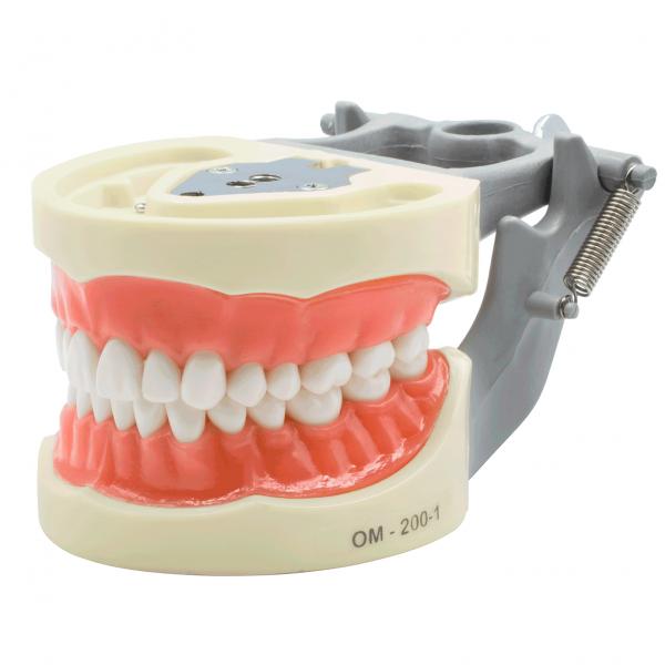 Tipodonto 200G Encía Suave -Marca: Genérica Articuladores | Odontology BG