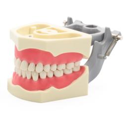 Tipodonto 860 Encía Suave -Marca: Genérica Articuladores | Odontology BG